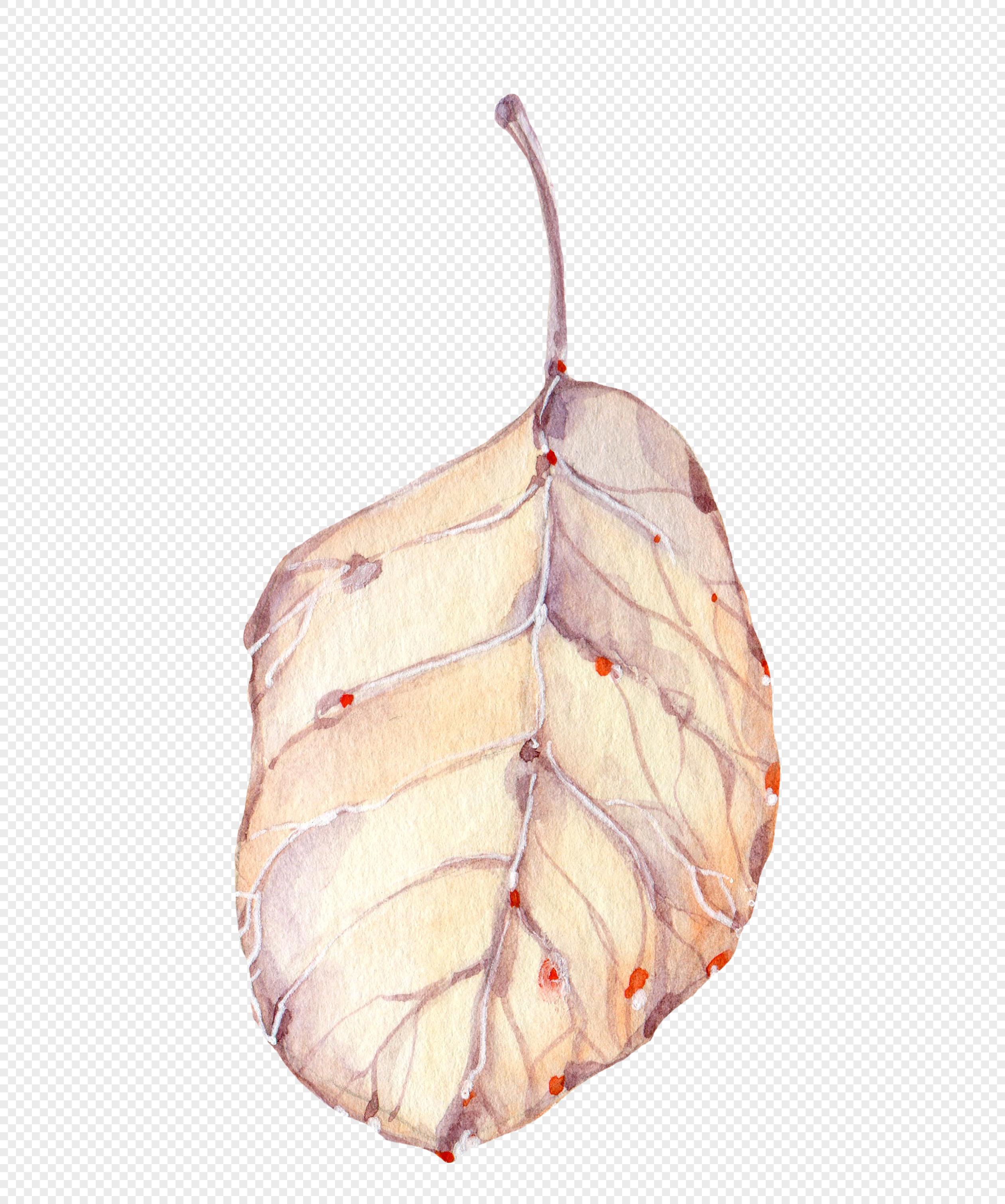 水彩手绘叶子素材