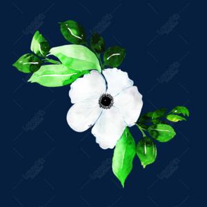 白色手绘的花朵矢量素材 照片