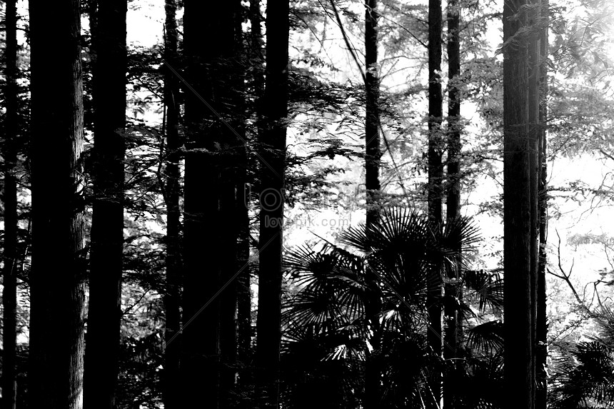 Bosque Oscuro Descarga Gratuita Hd Imagen De Fotografia Lovepik