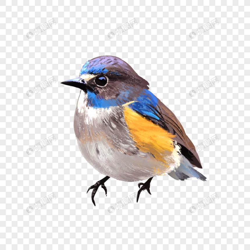 ציפור png