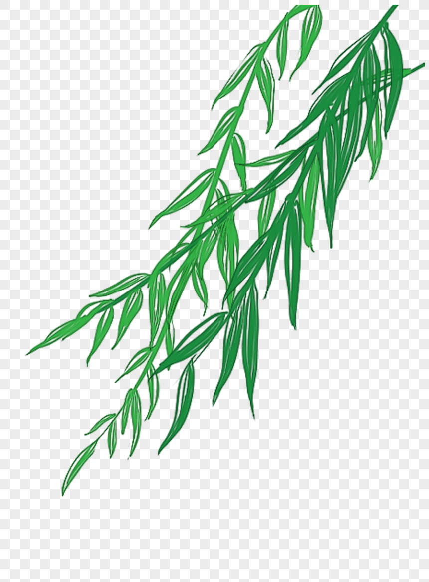 willow leaf png