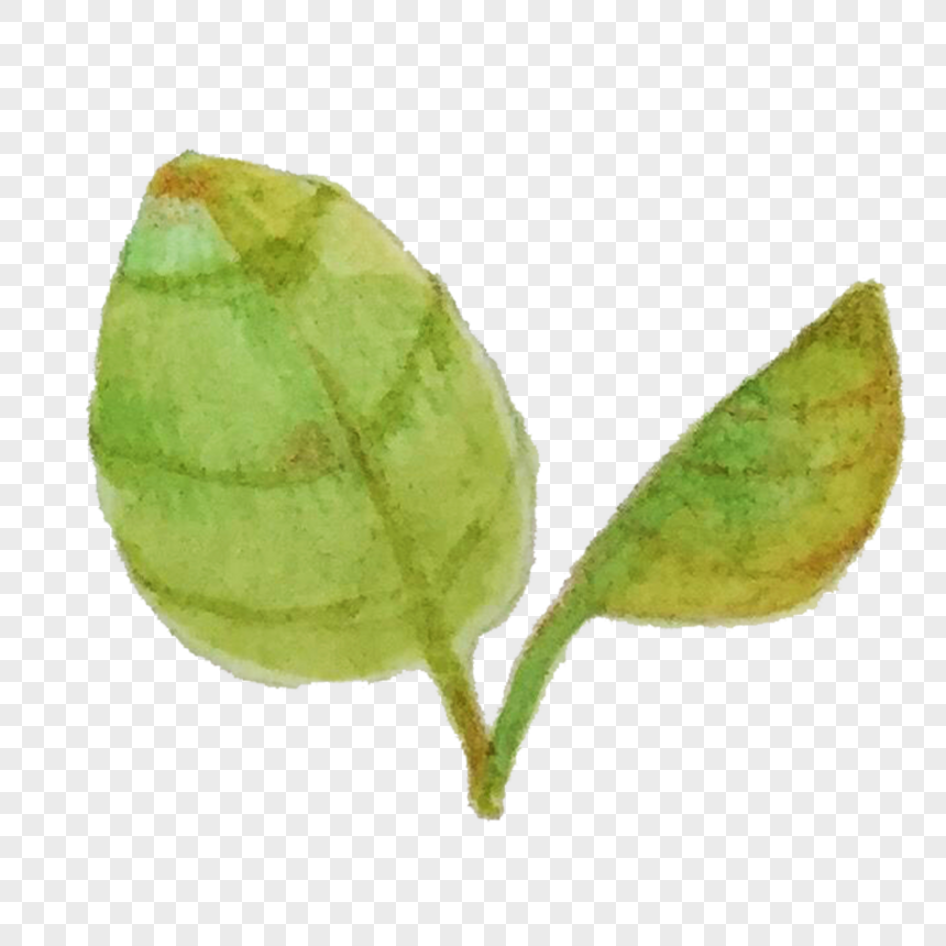 plant leaves png