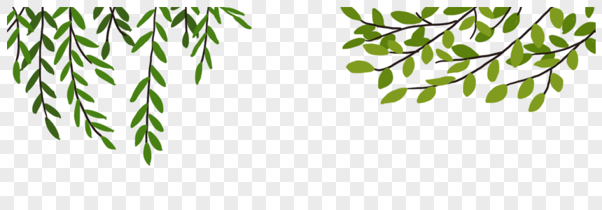 green willow png