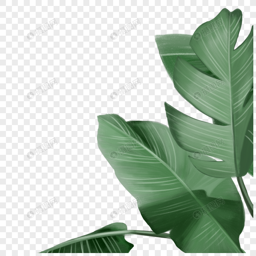 tropical leaves png