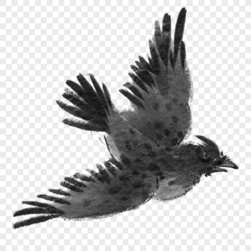 Hand painted flying bird png image_picture free download
