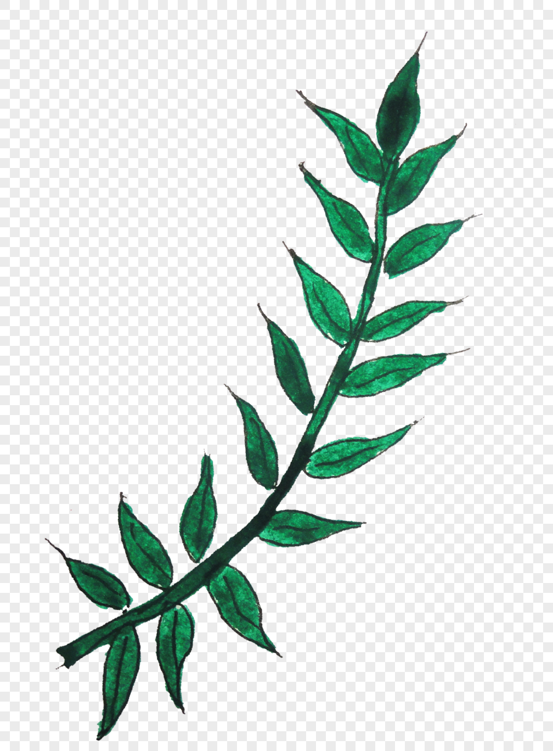 folhas de plantas Imagem Grátis_Gráficos Número 400213592