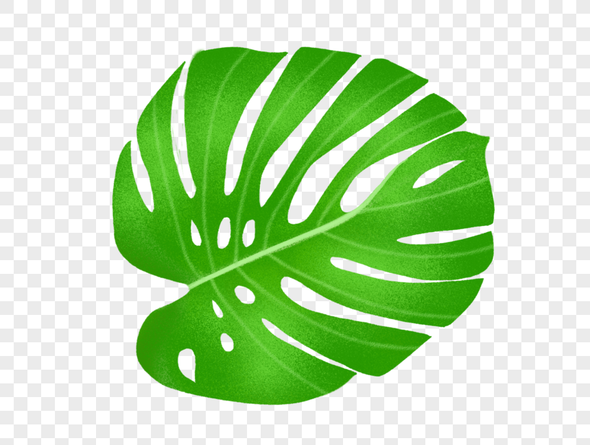 Tropical Leaves Png Image Picture Free Download 400216227 Lovepik Com Choose from over a million free vectors, clipart graphics, vector art images, design templates, and illustrations created by artists worldwide! tropical leaves png image picture free