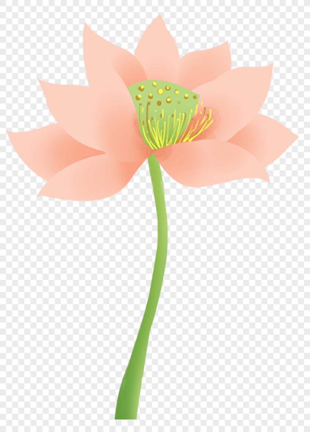 Lotus flower png imagepicture free download 400222658lovepik lotus flower izmirmasajfo