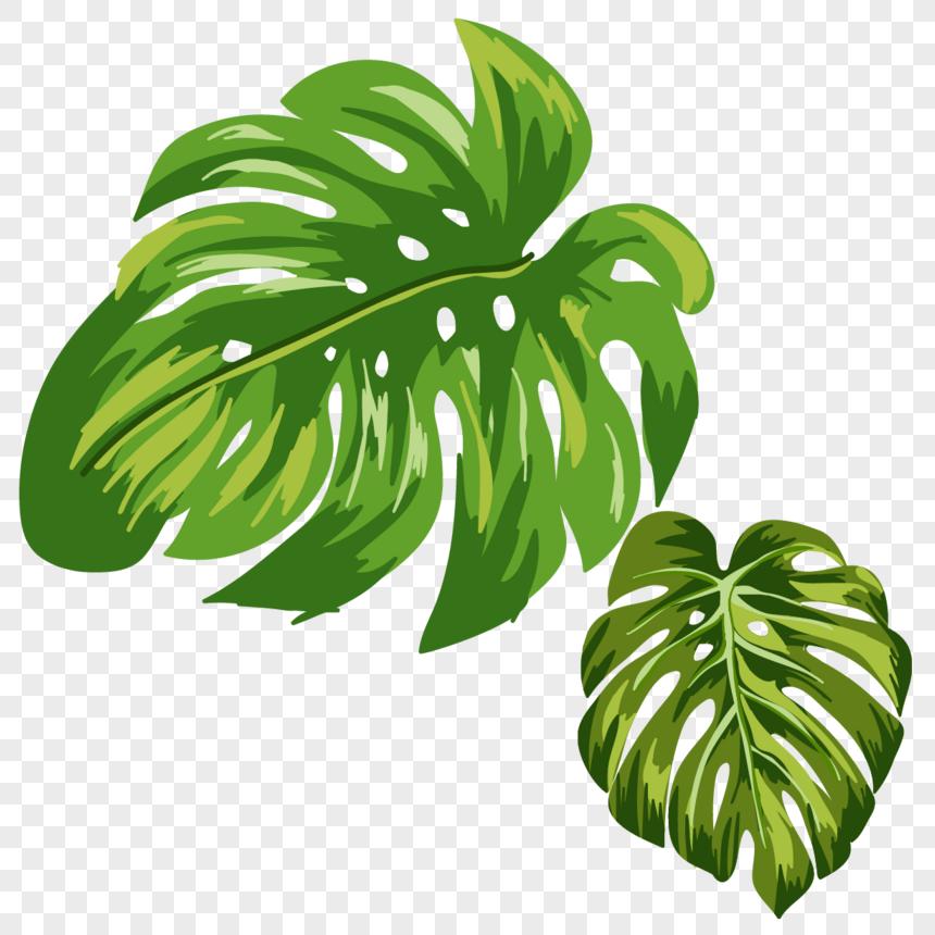 עלי הצמח png