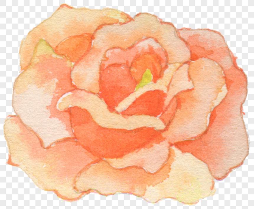 flower watercolor flowers png