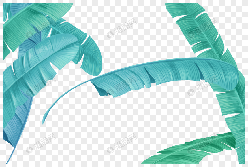 tropical plant leaves png
