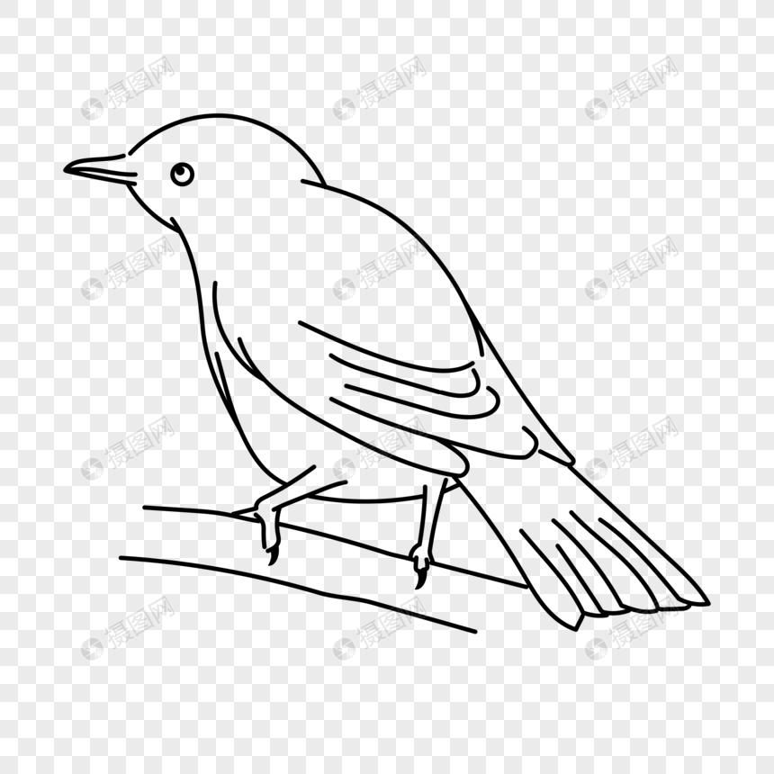 6000 Gambar Burung Vektor Hd Paling Baru Gambar Id