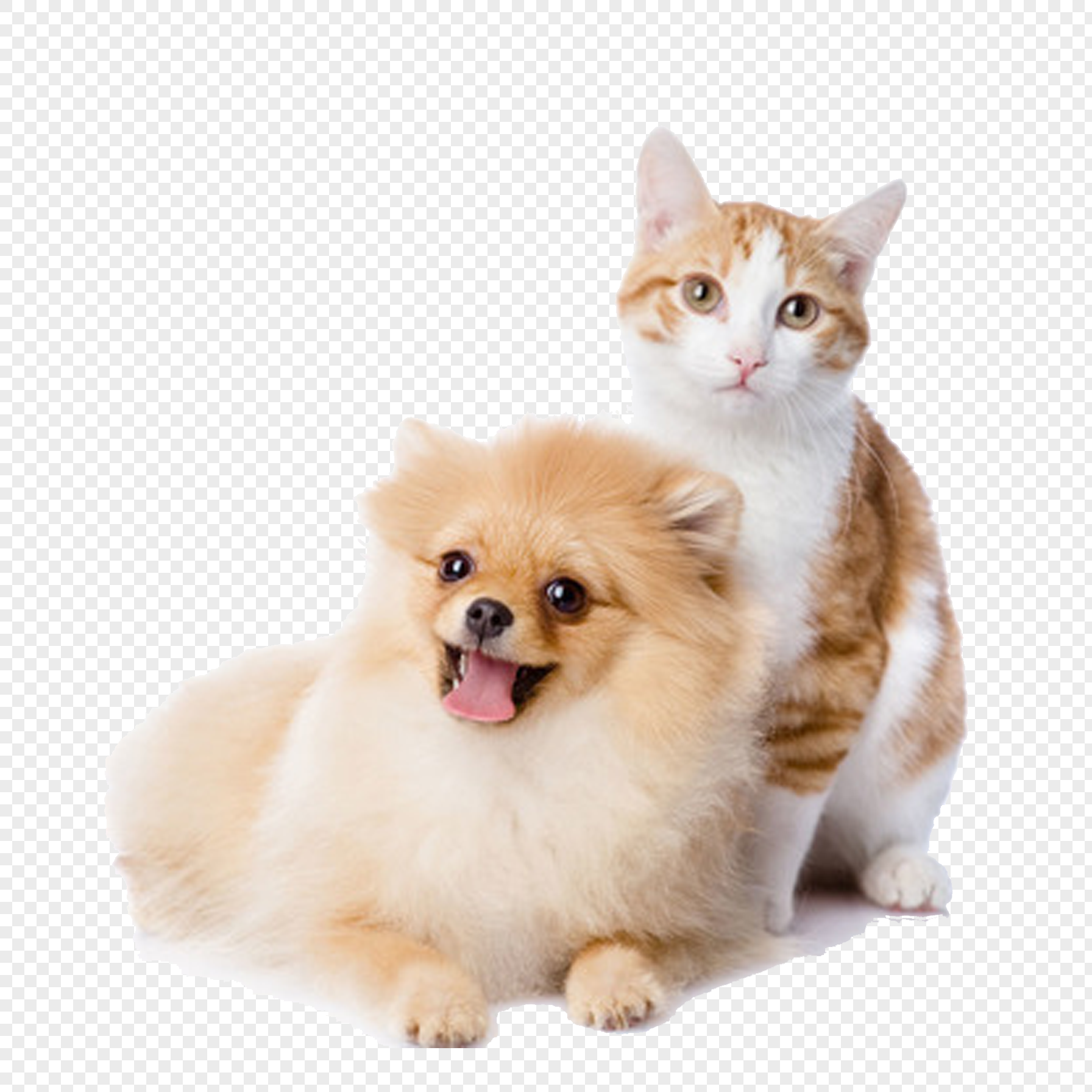 cat and dog png image picture free download 400281977