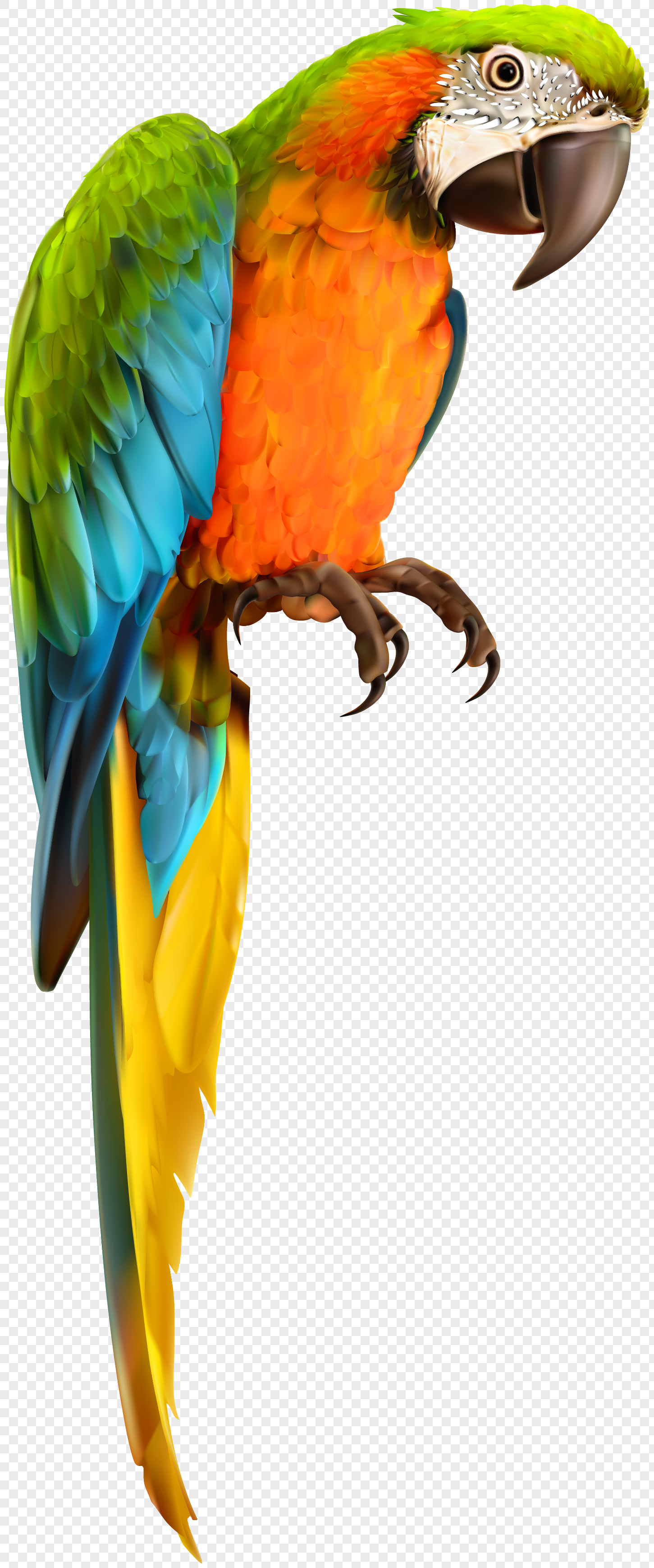 vector parrot material birds and animals png image_picture free