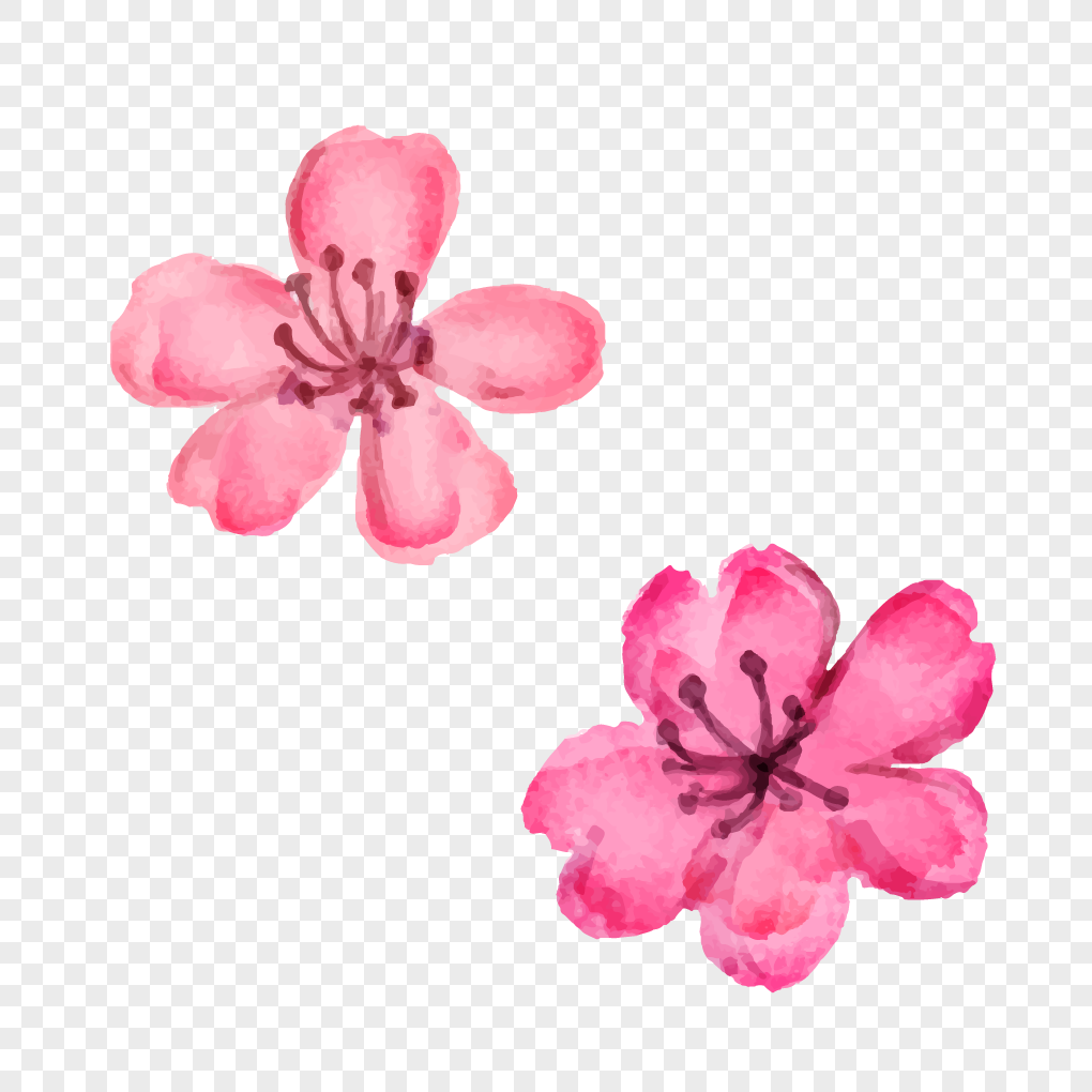 Watercolor Flowers And Beautiful Cherry Blossoms In Spring Png
