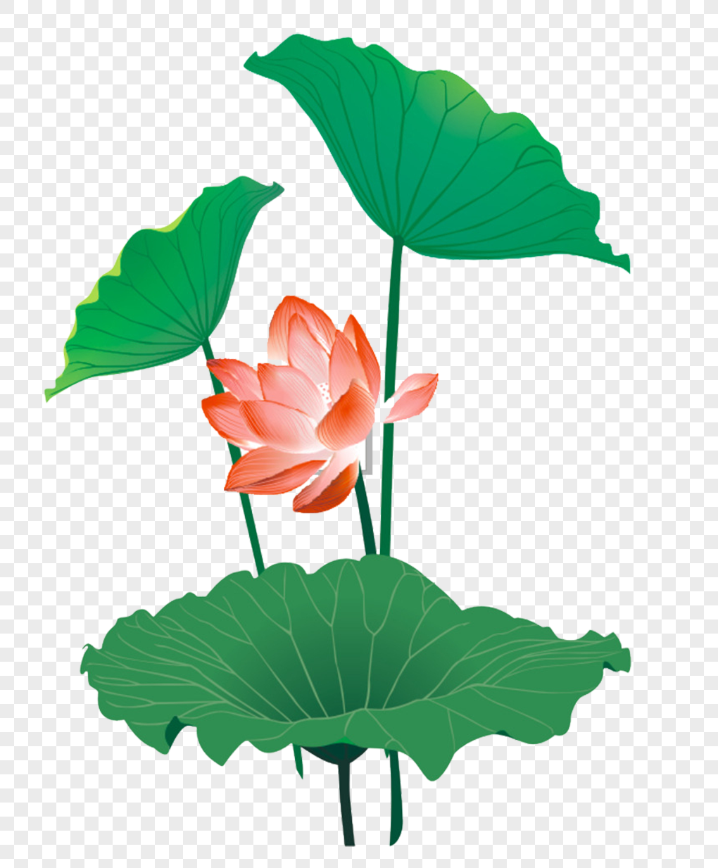 Chinese Feng Shui Ink Lotus Graphics Imagepicture Free Download