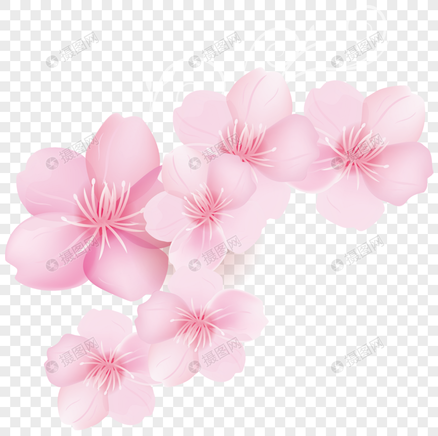 Fresh Spring Pink Flower Background Png Imagepicture Free Download