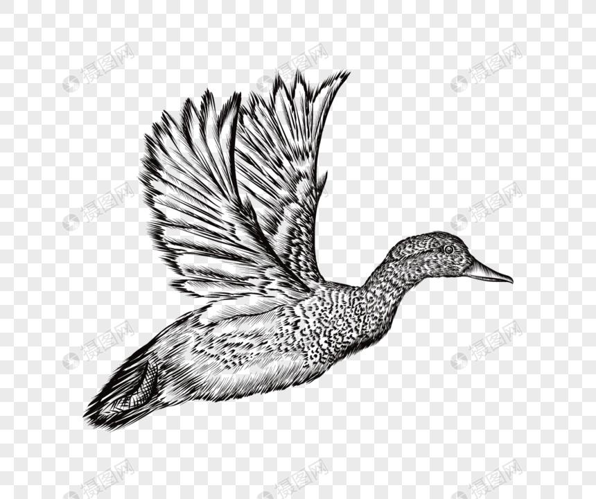 [Koleksi Terbaru] Sketsa Gambar Burung