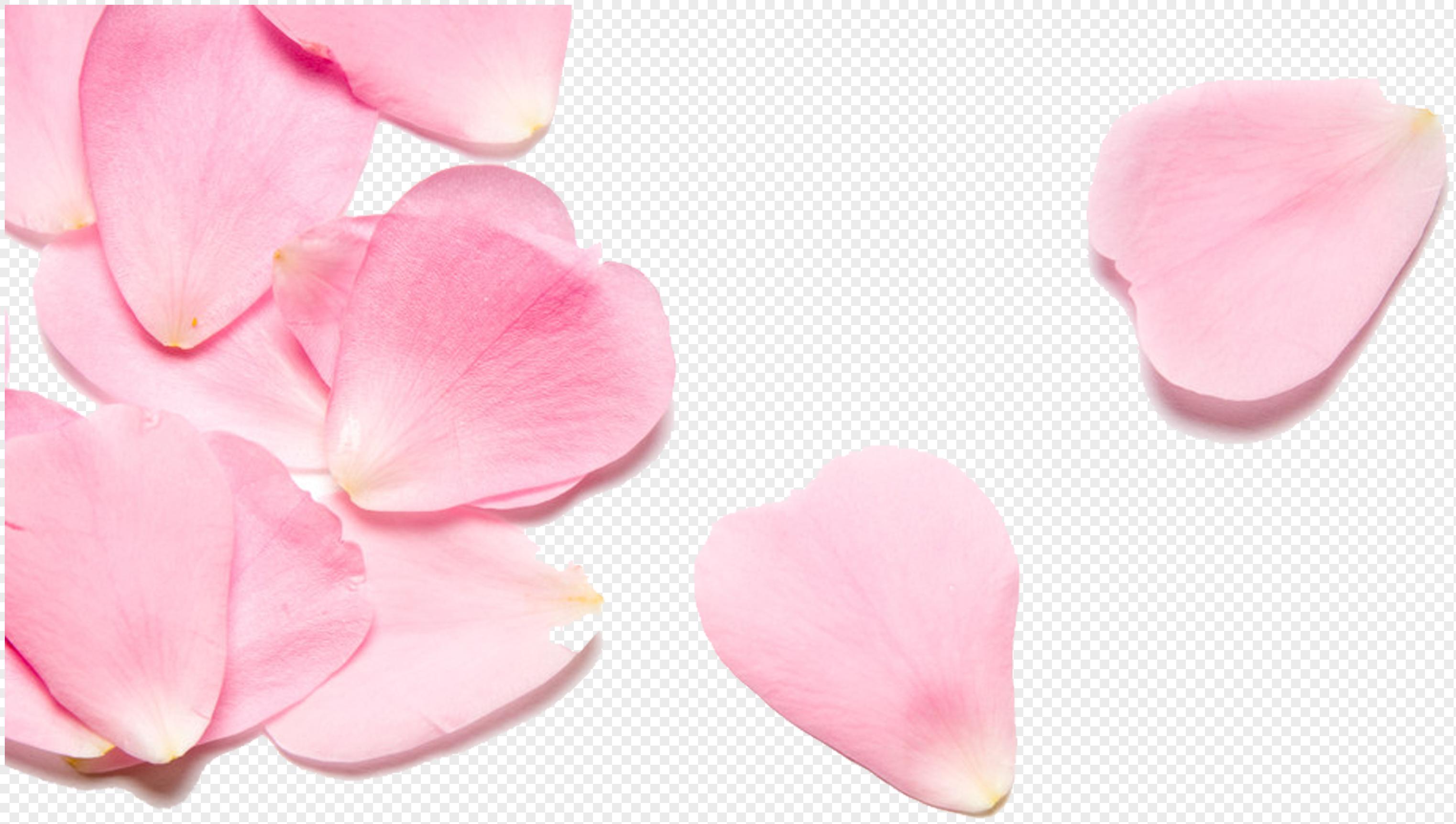 Pink Flower Petals Png Imagepicture Free Download 400407242lovepik