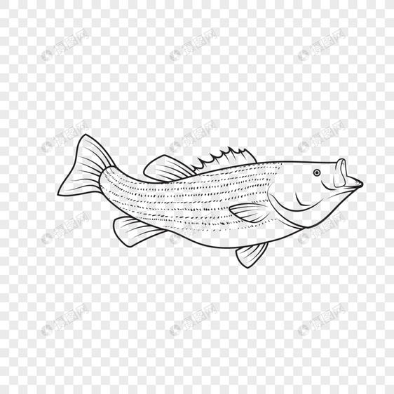 Gambar Garis Sketsa Tangan Dicat Dekoratif Elemen Vektor Ikan Gambar