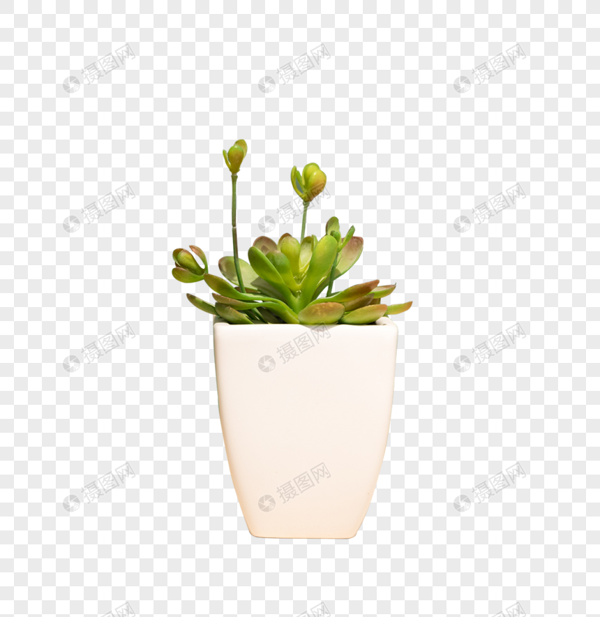potted green plants on the table png