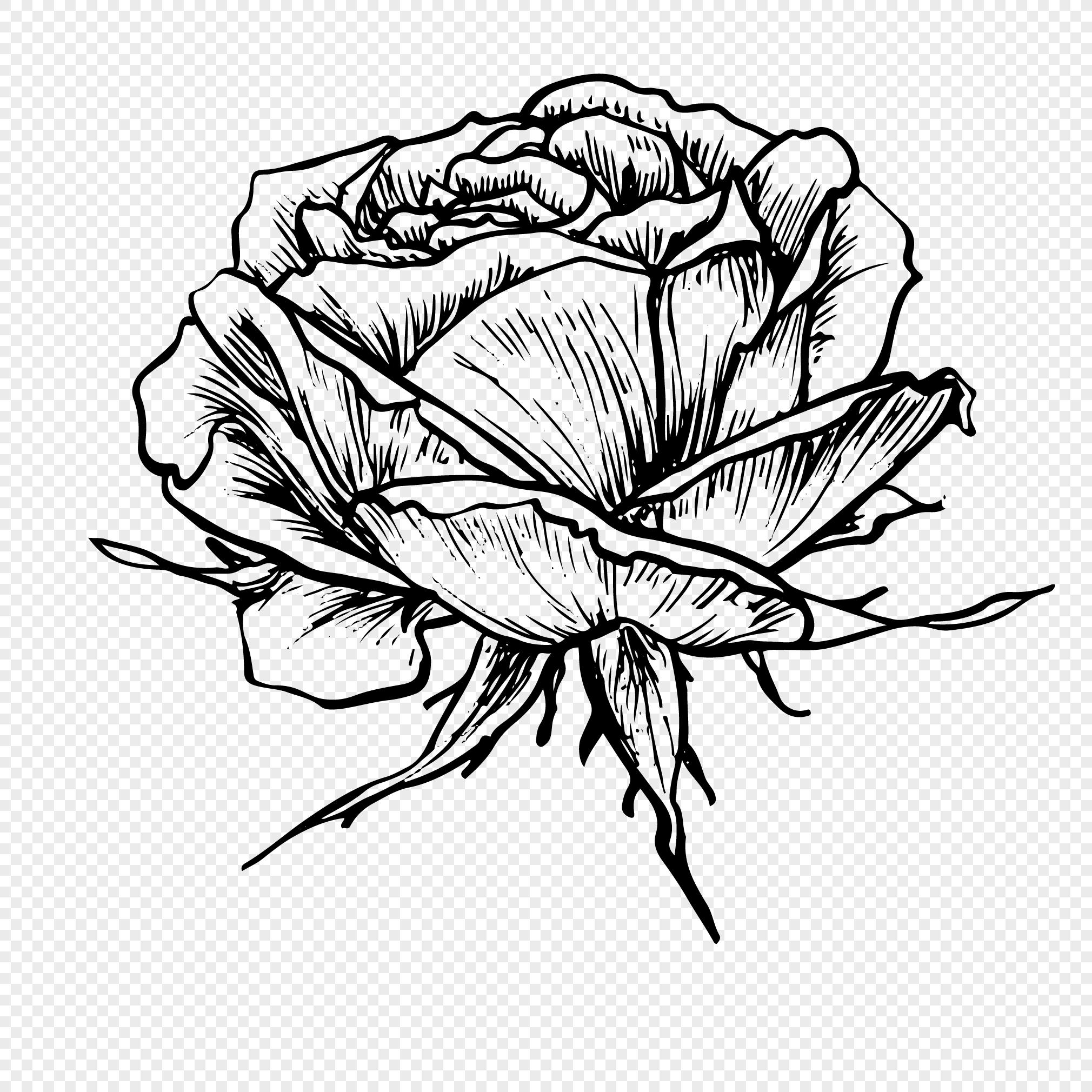 Gambar Bunga Ros Hitam Putih Brad Erva Doce Info