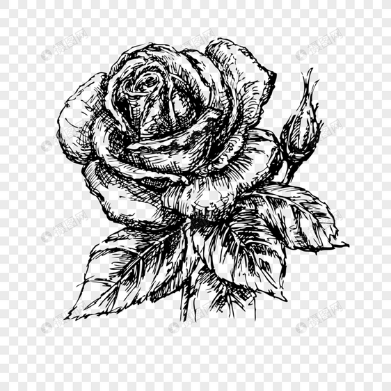 Lukisan Bunga Ros Hitam Putih Kata Kata