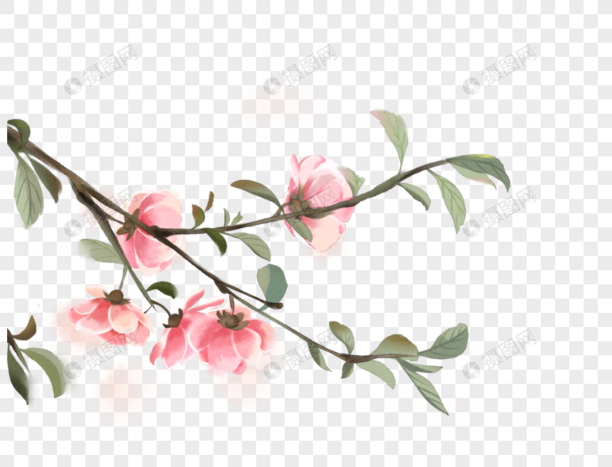 watercolor flowers and plants png
