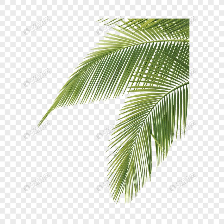 coconut leaf png