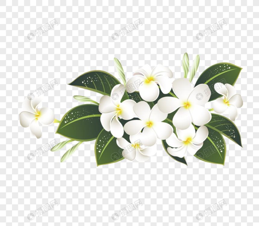 Beautiful Jasmine Flower Png Image Picture Free Download