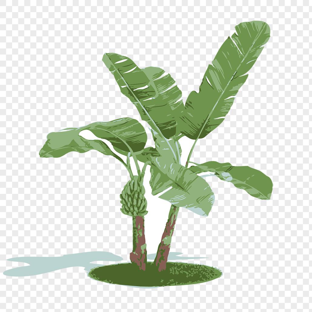 Banana Tree Png Image Picture Free Download 400480859 Lovepik Com