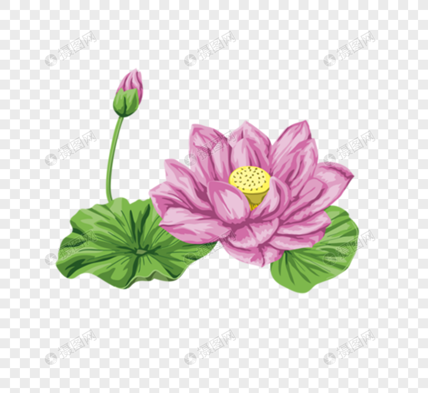 Pink Lotus Flower Png Imagepicture Free Download 400528538lovepikcom
