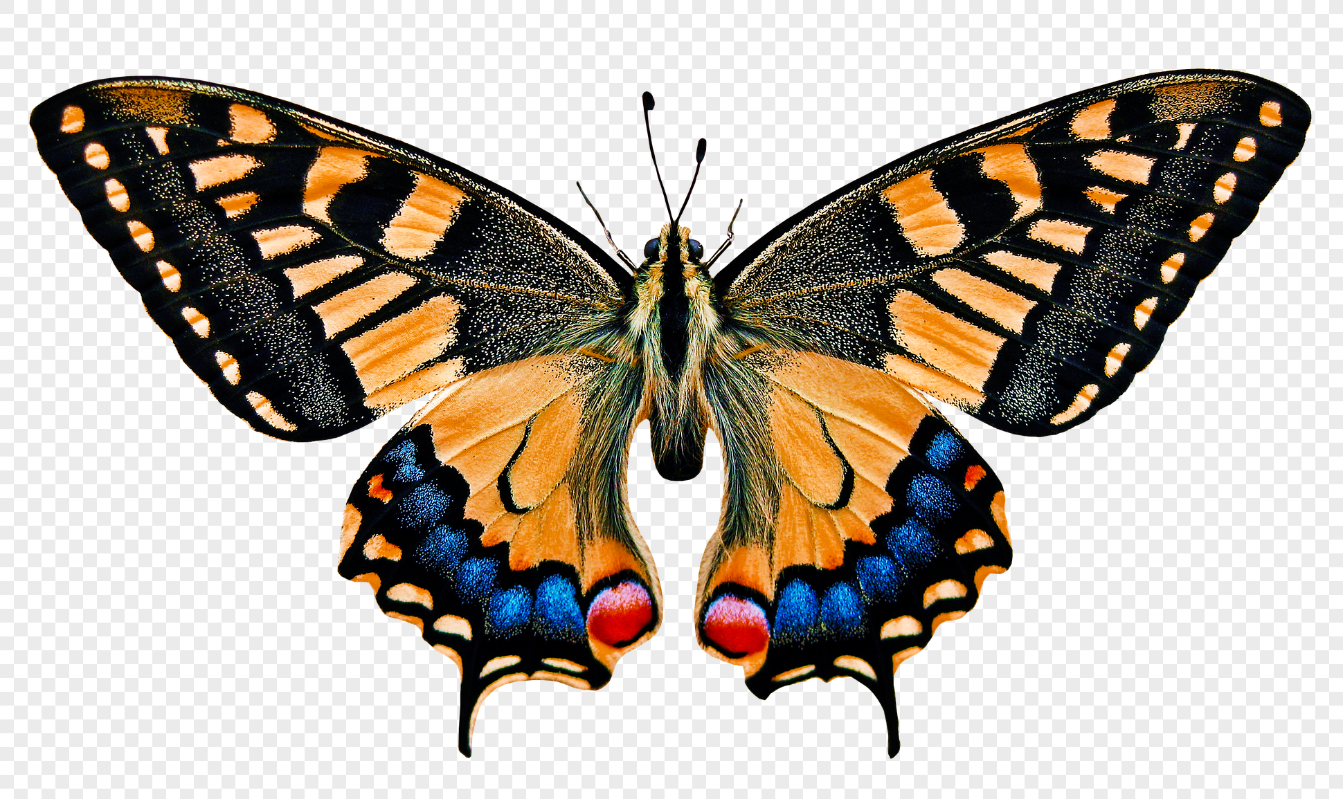 butterfly Software - Free Download butterfly - Top 4 Download