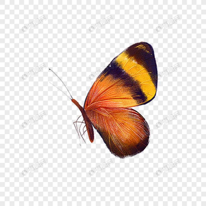 Kelebek El Sulu Boya Dekoratif Malzeme Boyali Resim Grafik