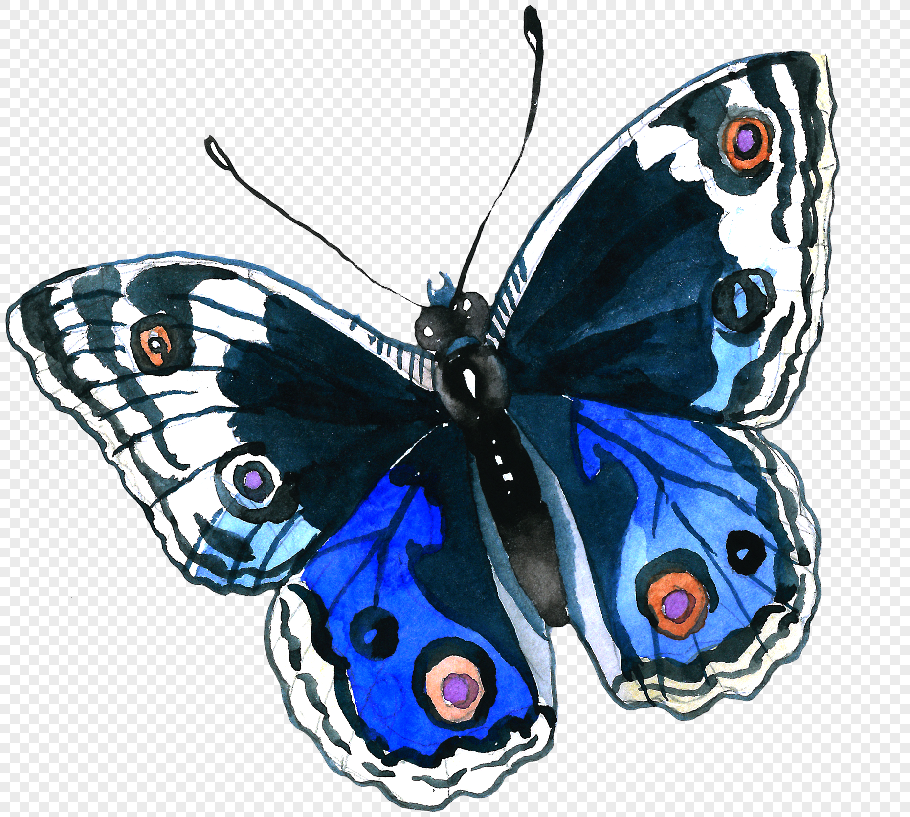 Hand Painted Watercolor Blue Butterfly Png Image Picture Free