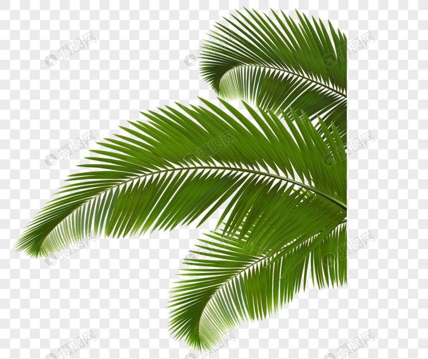 green plant coconut leaf png