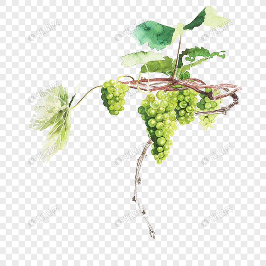 100 Gambar Lukisan Anggur Paling Keren