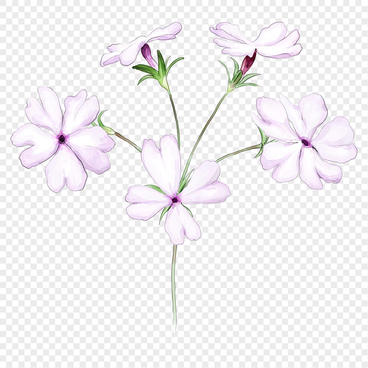 cal hoa
