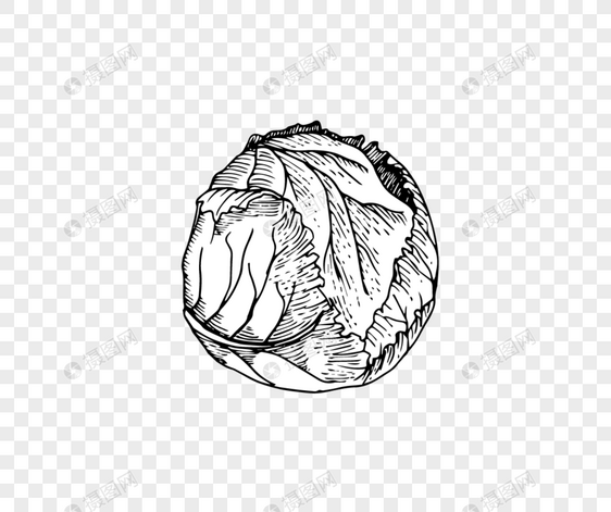 Desain Sayur Gaya Sketsa Gambar Unduh Gratis Grafik