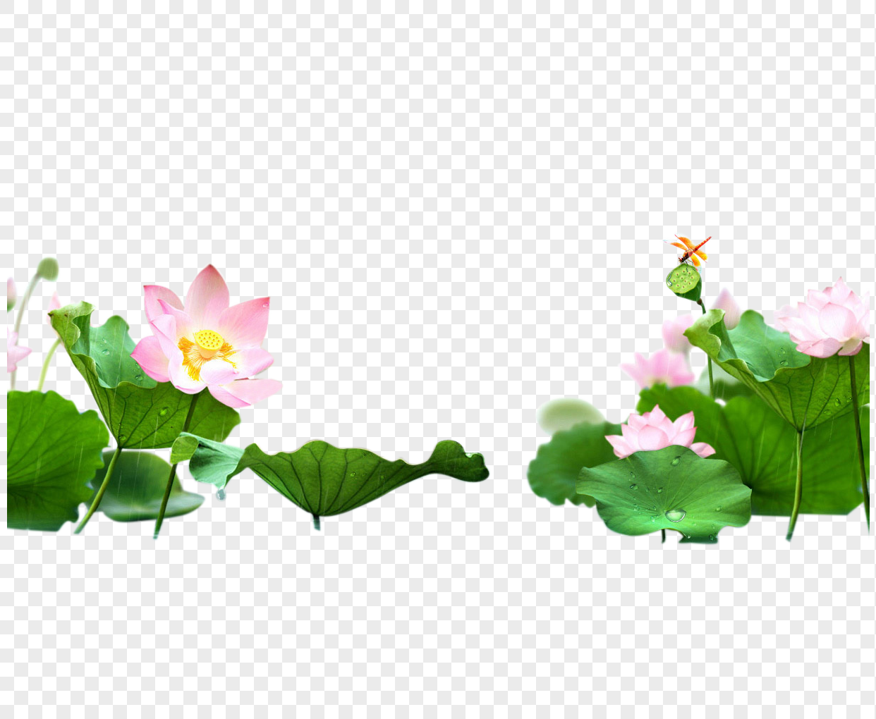 The corner of the lotus pond png image_picture free download.