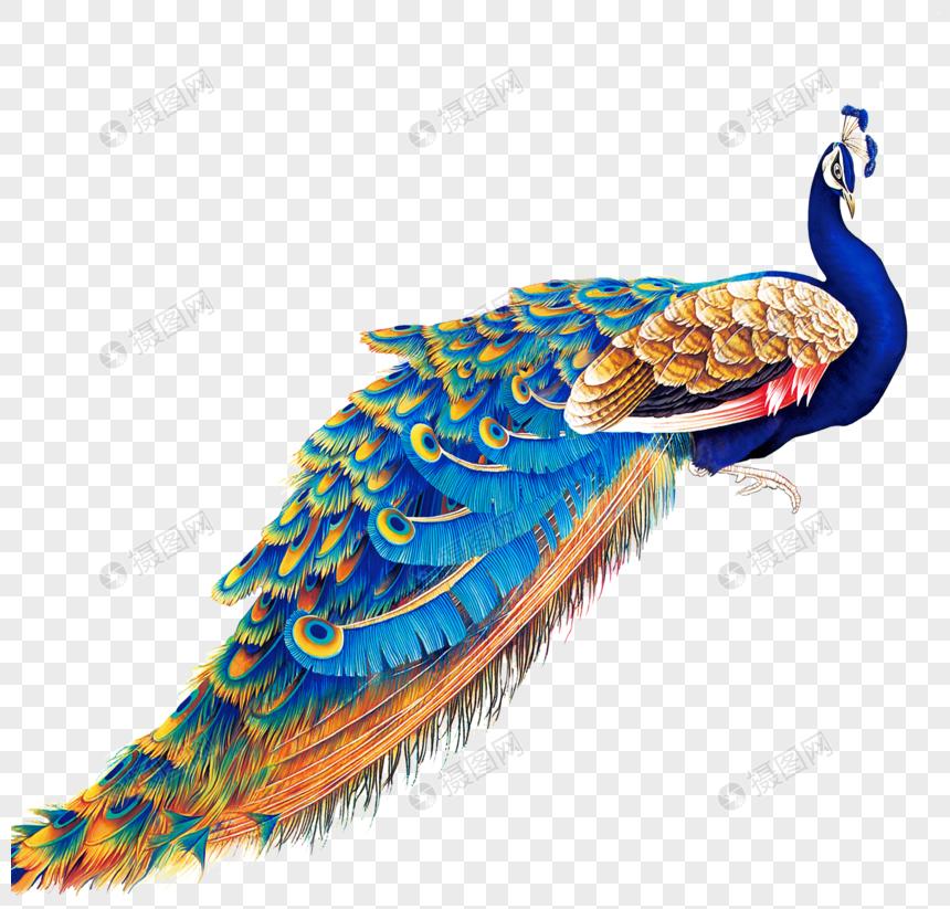 Download 980+ Foto Gambar Burung Merak Vektor HD Terbaru Gratis