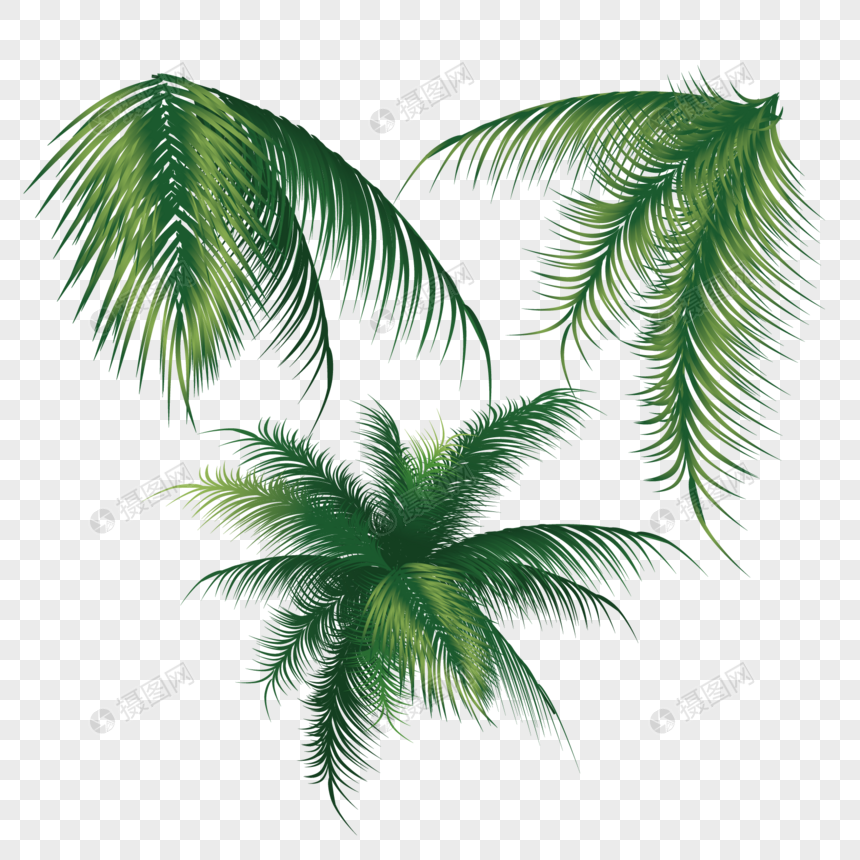 Palmeras Png Pictures Free Download