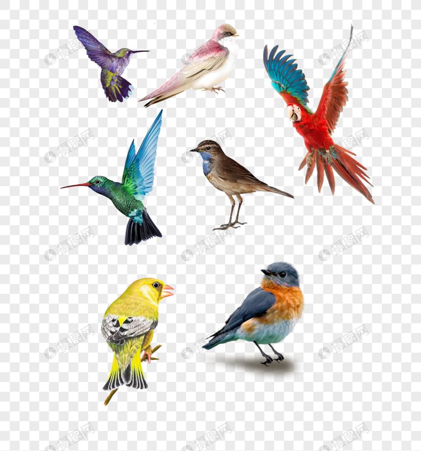 Seven flying birds png image_picture free download 400683469_lovepik com