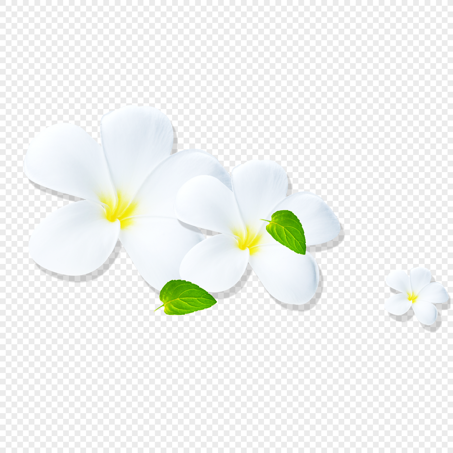 White Flower Png Imagepicture Free Download 400698019lovepik