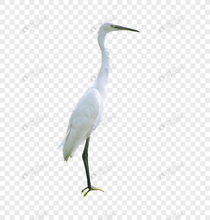 Burung Bangau Gambar Unduh Gratis Imej 400699416 Format Png My Lovepik Com