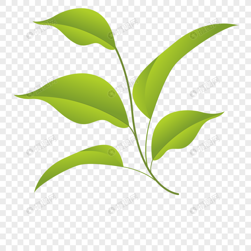 Mulberry leaves png image_picture free download