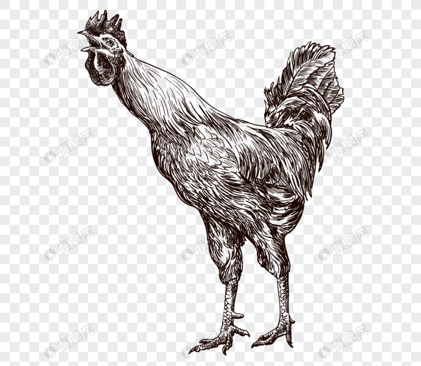 Ayam Ditarik Tangan Gambar Unduh Gratisimej 400751225format My