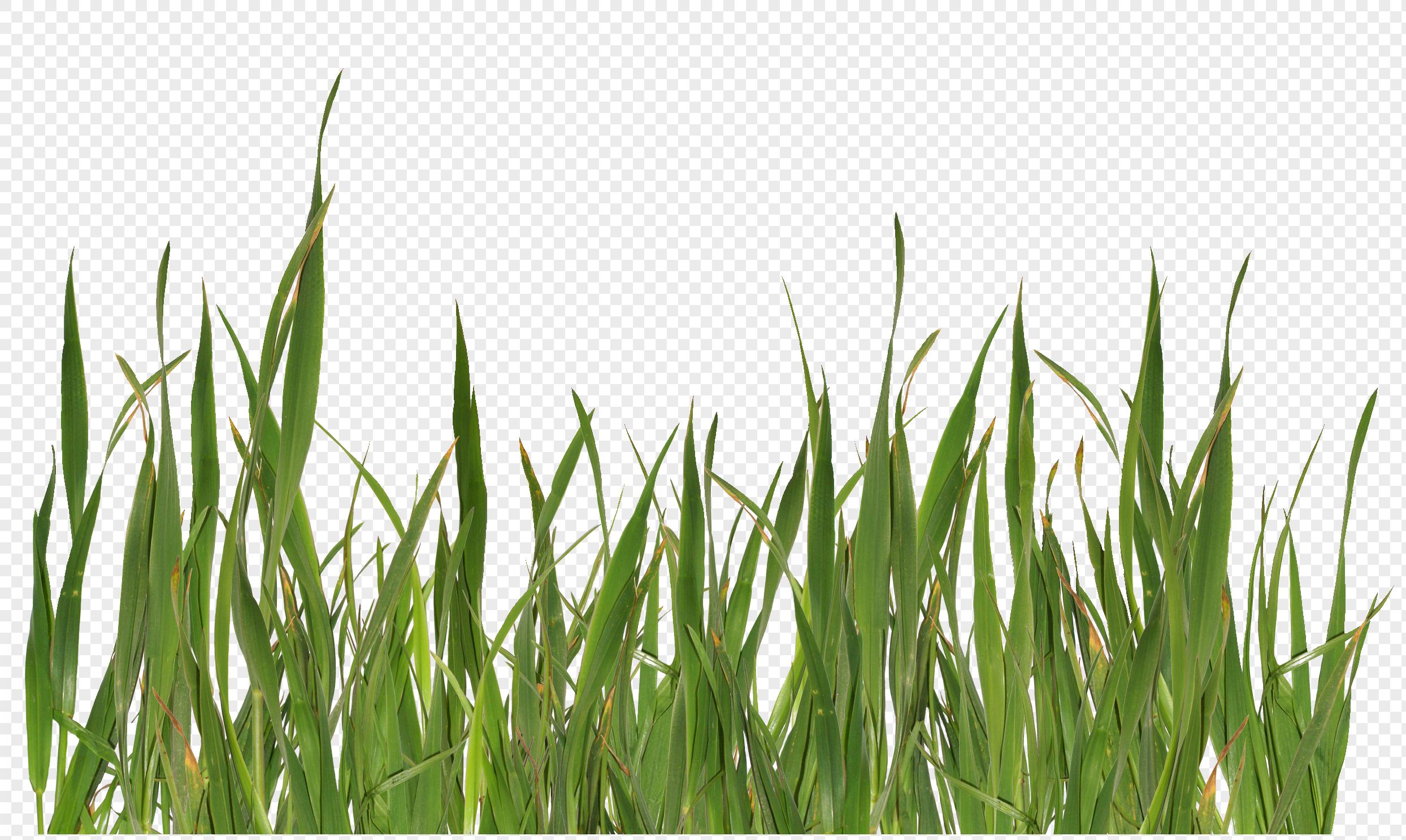 green grass png - HD2468×1467