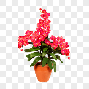 Red Flowers Image Bonsai Potted Plant