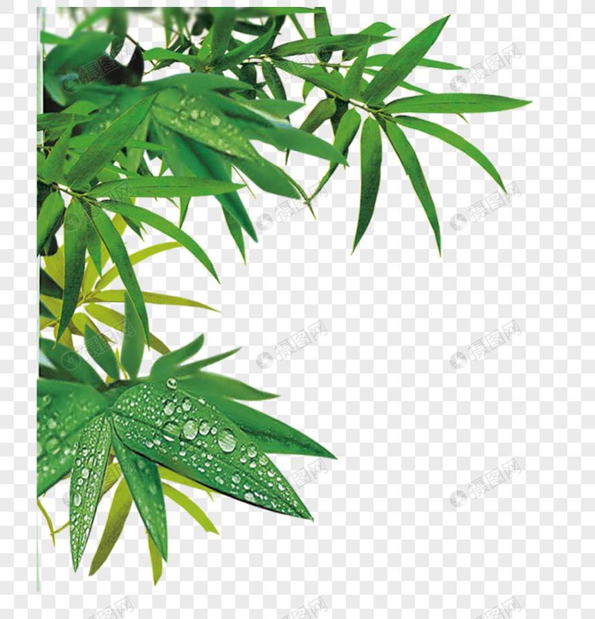 La Foglia Di Bamb.Foglie Di Bambu Immagine Gratis Grafica Numero